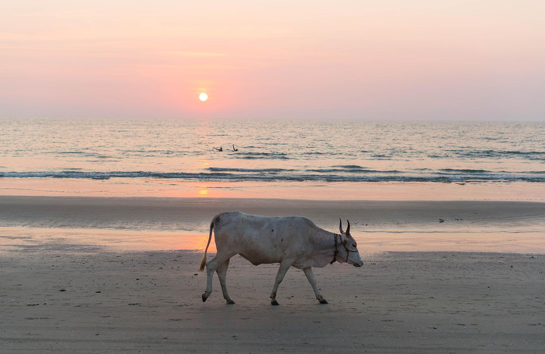 Goa-India-Yoga-Teacher-Training-Sunset-2
