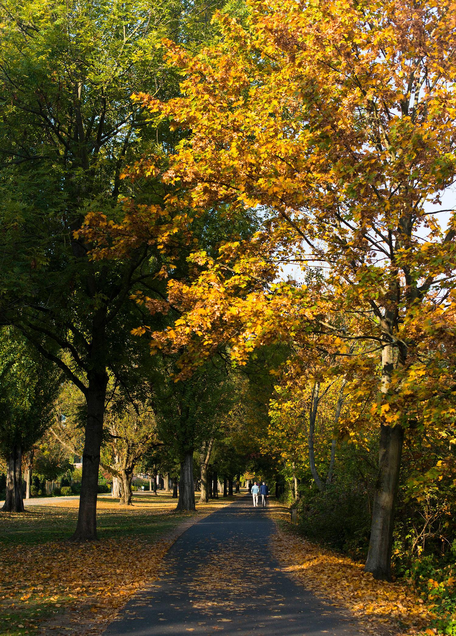 Herbst-golden-1