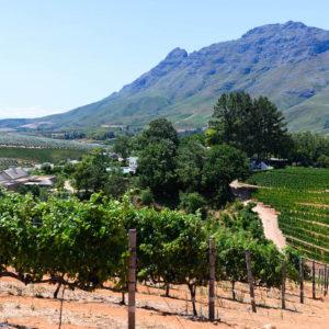 Von Kapstadt nach Franschhoek – meine Top 4 Weingüter in Südafrika (plus eine Farm)