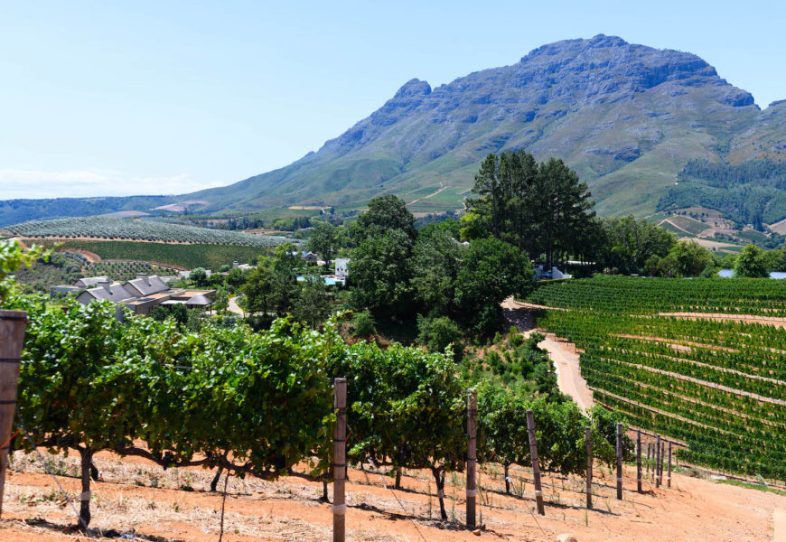 From Cape Town to Franschhoek: my top 4 wineries (plus one farm) in South Africa